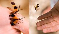 Bugs_9999_54